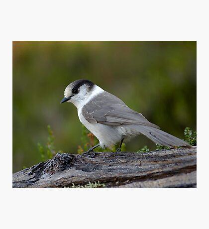 Mountain Bird Photographic Print