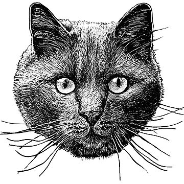 Cat Face by Artberry