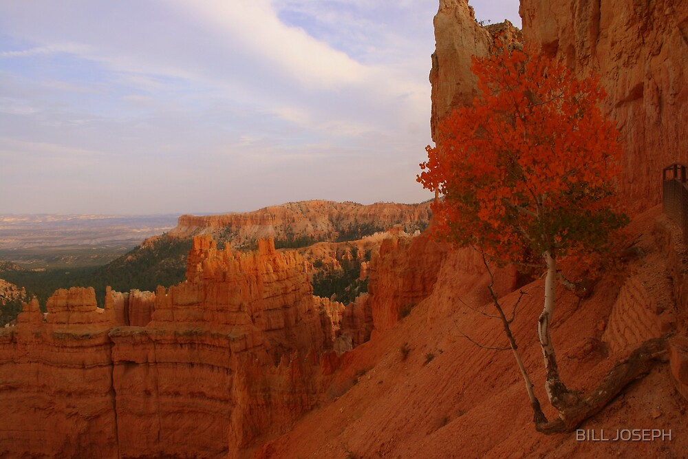 Bryce Canyon Aspen by BILL JOSEPH