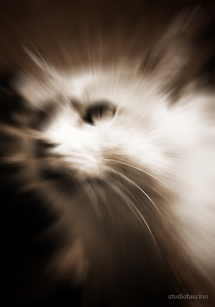 meow by studiofascino