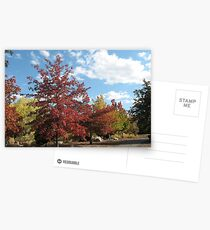 Fall at the Park Postcards