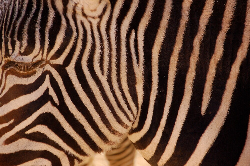 ABSTRACT ZEBRA by pulsdesign