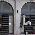 an XXL white horse in the Spanish Riding School, Vienna by Martin Langer