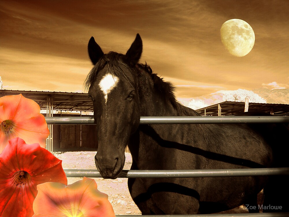 Beautiful Horse - Star Of The West by Zoe Marlowe