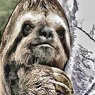 Chilled Sloth von Marlene Watson