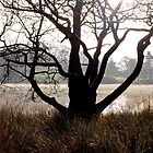 Morning at Loughrigg Tarn by mikebov