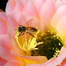 Cactus Blossom with Bee by jsmusic