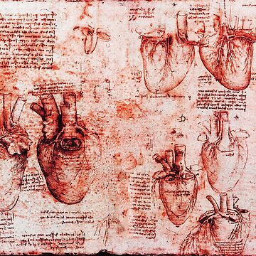 Heart And Its Blood Vessels. Leonardo Da Vinci, Anatomy Drawings Red by BulganLumini