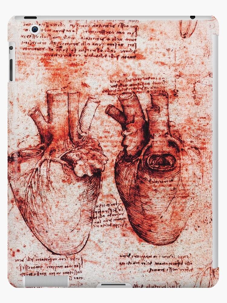 Heart And Its Blood Vessels Leonardo Da Vinci Anatomy Drawings Red