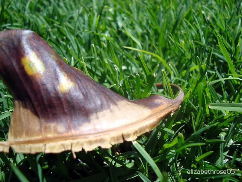 Leaf on the Grass by elizabethrose05
