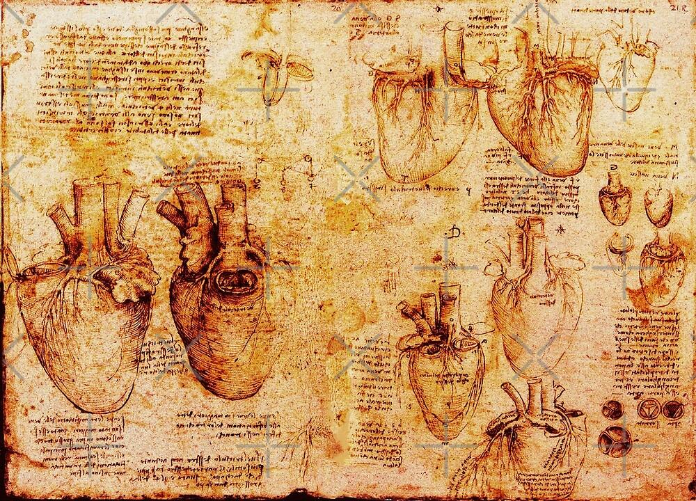 Heart And Its Blood Vessels, Leonardo Da Vinci Anatomy Drawings, Brown by BulganLumini