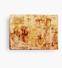 Heart And Its Blood Vessels, Leonardo Da Vinci Anatomy Drawings, Brown Canvas Print