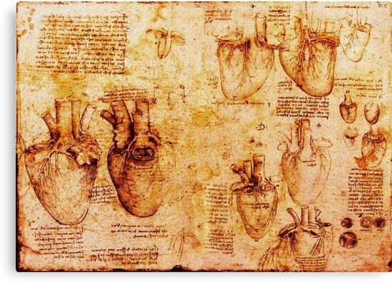 Heart And Its Blood Vessels, Leonardo Da Vinci Anatomy Drawings ...