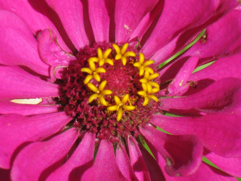 Pink Sunshine by Larry R McCrea