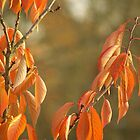 Autumn Leaves by Gilberte