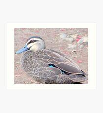 """Momma Duck"" Art Print"
