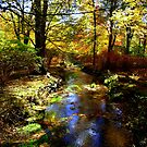 COLOURS OF THE AUTUMN by Sharon A. Henson