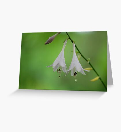 Hosta Bells Greeting Card