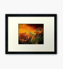 Dragonfly...Towards The Light  Framed Print