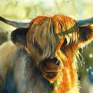 Highland cow by Tania Richard