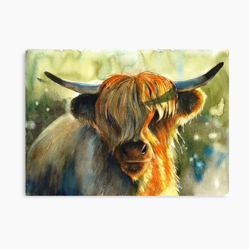 Highland Kuh Leinwanddruck