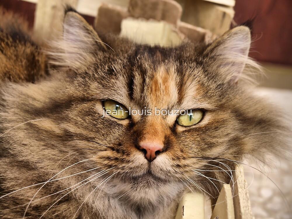 Homeless Kitty by jean-louis bouzou