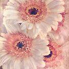 Gerbera Daisy Bouquet von Celeste Mookherjee