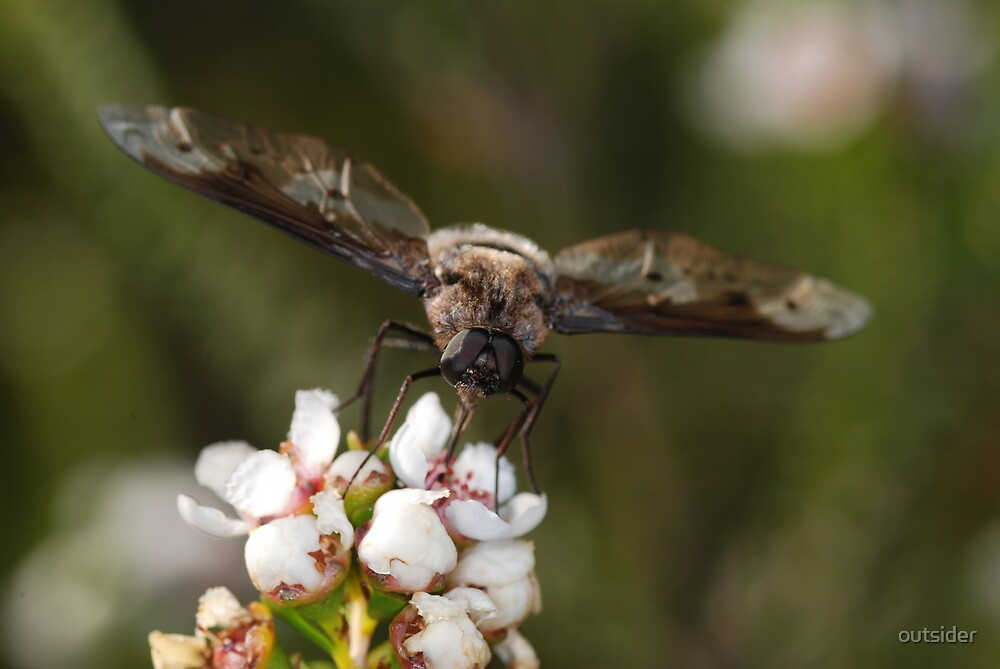 March Fly in October by outsider