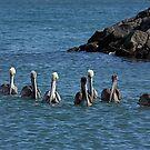 The Pelican Posse by Jan  Wall