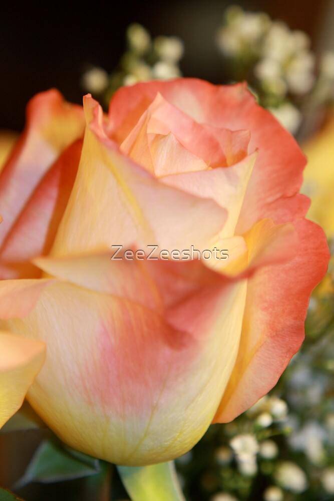 A pretty peach Rose by ZeeZeeshots