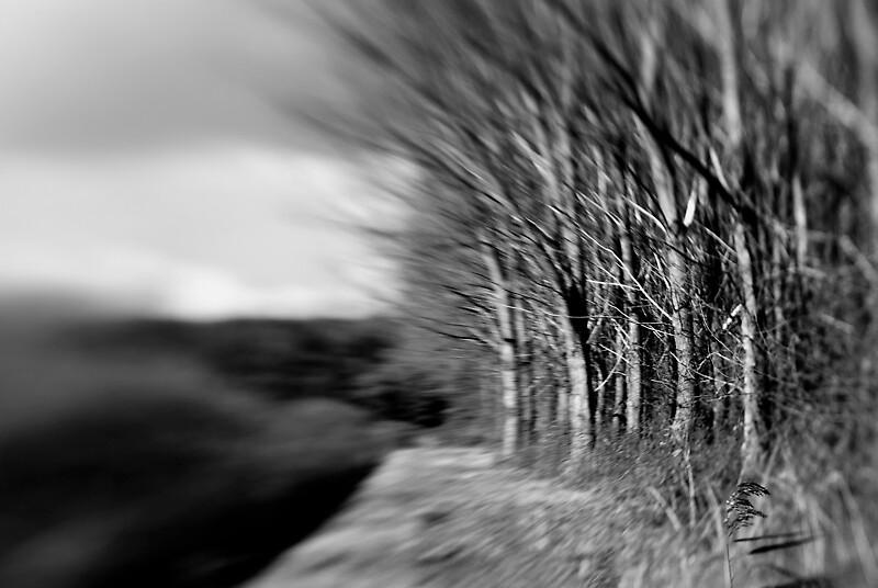 Forest Edge by Bojoura Stolz