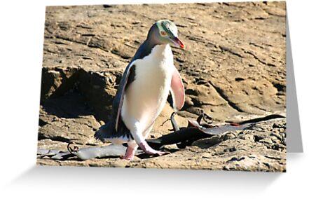 Yellow-eyed Penguin Walking - Catlins region of New Zealand by Nicola Barnard