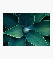 Floral green pattern Photographic Print