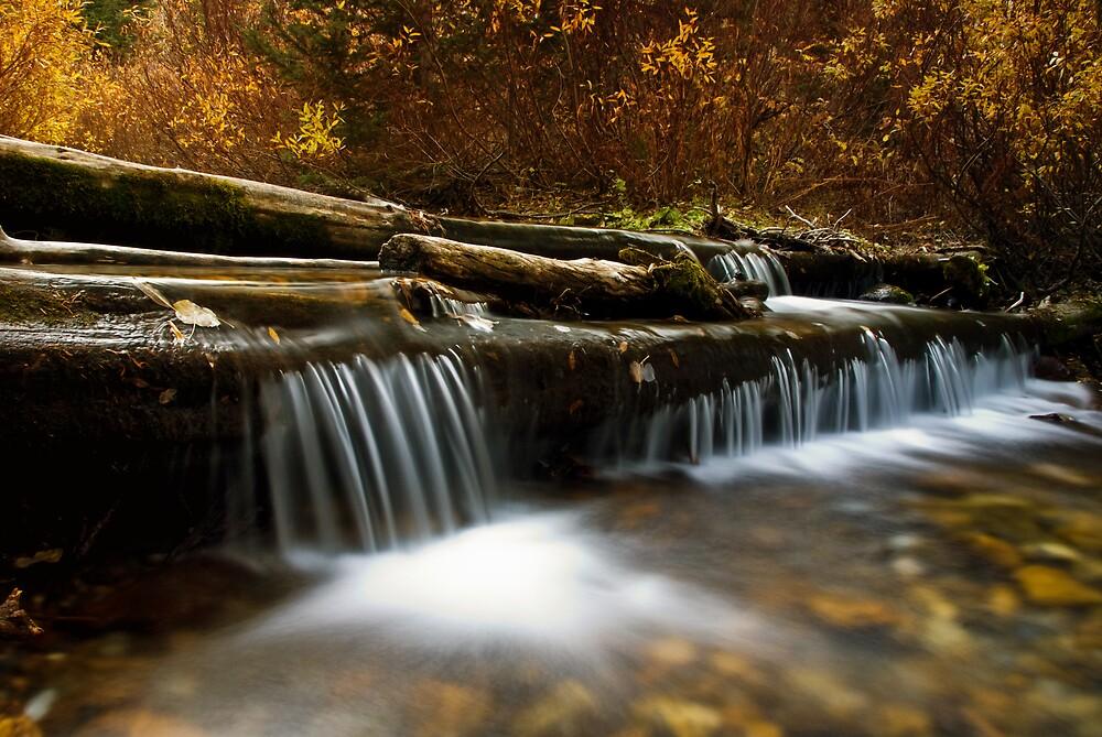 fall by Rachel  McKinnie