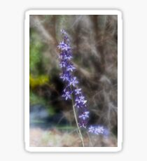 Great Sun Orchid (Thelymitra aristata) Sticker