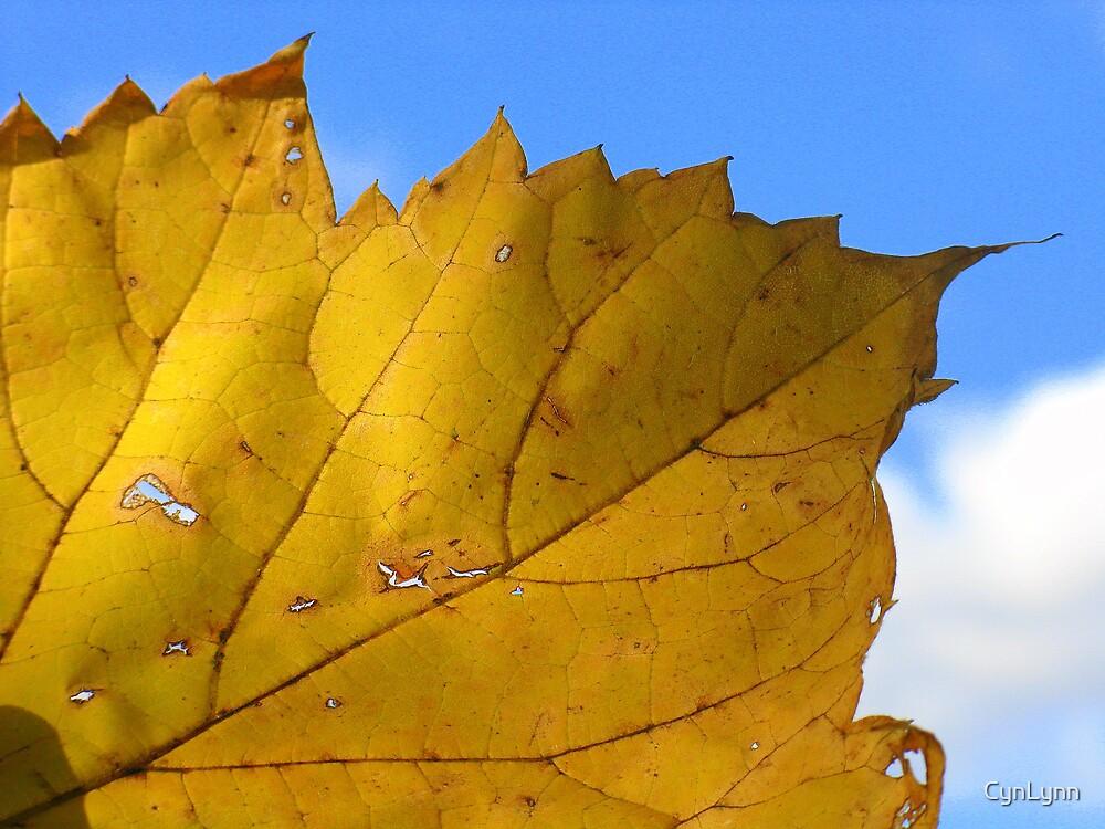Golden Fall by CynLynn