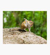 Funny amusing little chipmunk Photographic Print