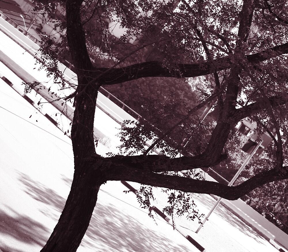 Framed by magnus9999