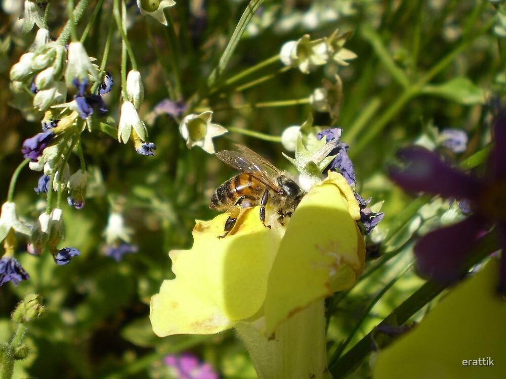 pollen hunt by erattik