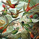 Hummingbirds by rapplatt