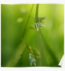 Dewy Grass | Macro Photography Close-up Poster