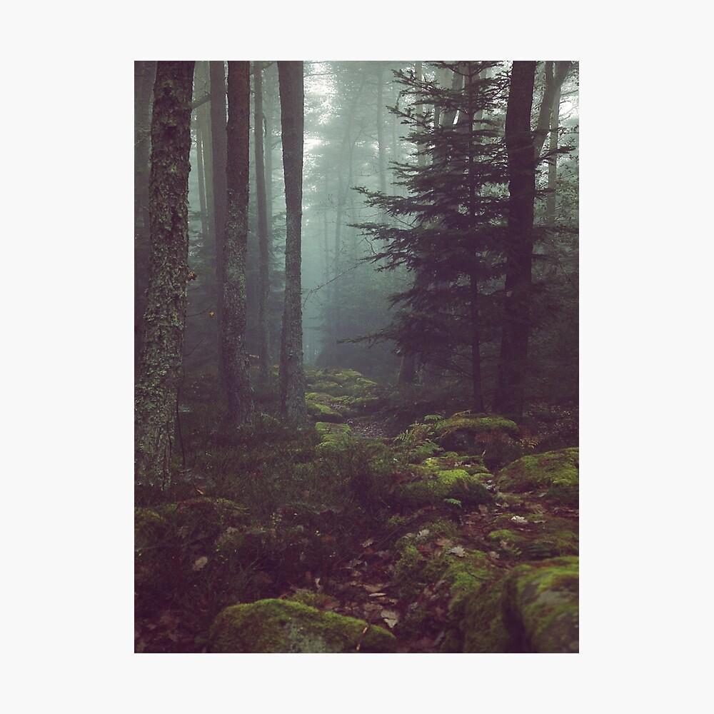 Waldnacht Fotodruck