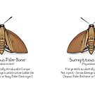Surreptitious Palm-Borer Moth by Immy Smith (aka Cartoon Neuron)