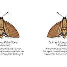 Surreptitious Palm-Borer Moth by Cartoon Neuron