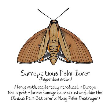 Surreptitious Palm-Borer Moth by Immy