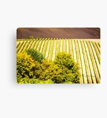 Rows of Vines in a Vineyard in Tuscany - Italy Canvas Print