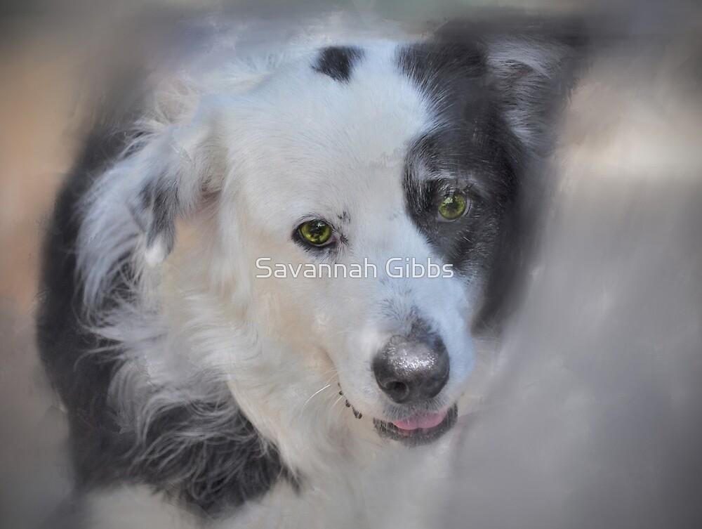 Puppy by Savannah Gibbs