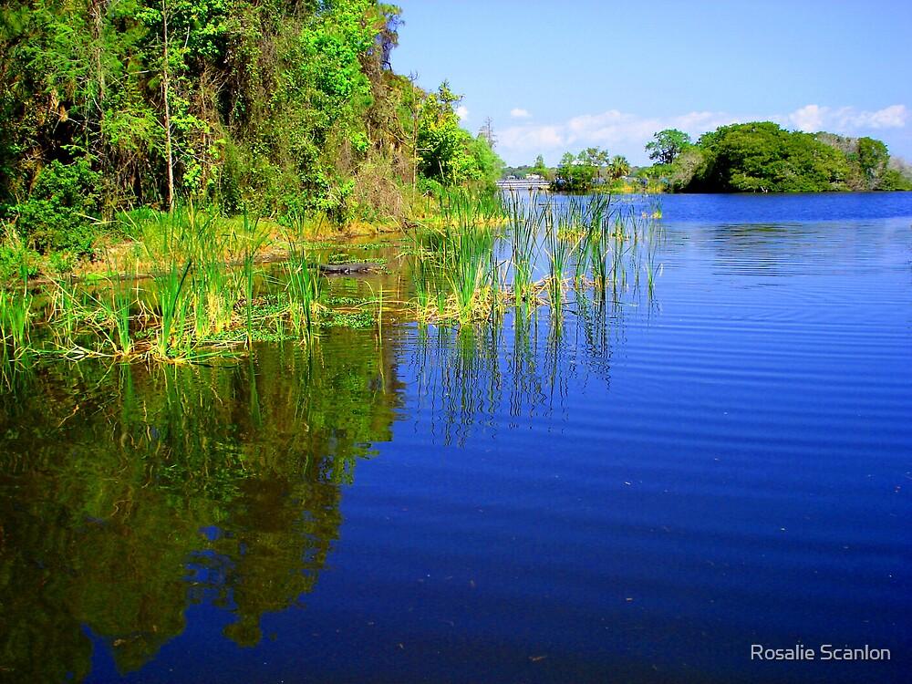 Alligator Lake by Rosalie Scanlon