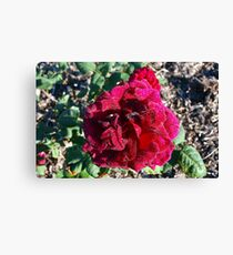 The Rose ~ Ena Harkness Canvas Print