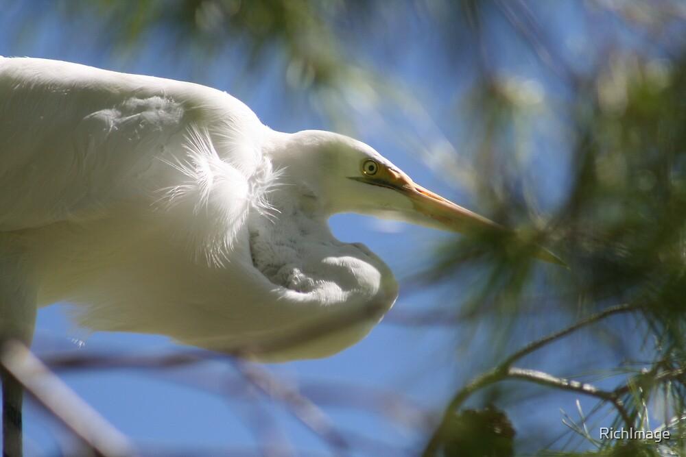 Egret by RichImage
